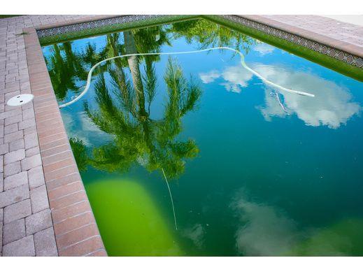 rattraper une eau de piscine verte